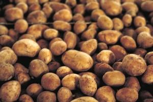Kentang merupakan salah satu bahan makanan yang mengandung banyak karbohidrat.