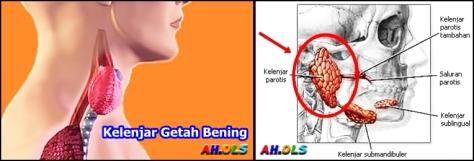 kelenjar-getah-bening-3-horz-1