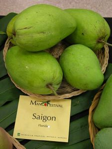 Saigon mangoes on display at the 15th Annual International Mango Festival at the Fairchild Tropical Botanic Garden, Florida, United States