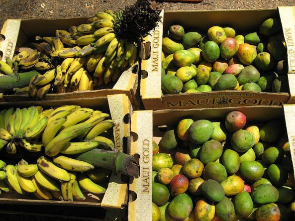 Freshly harvested mangoes and bananas at a fruit stand on the island of Maui, Hawaii