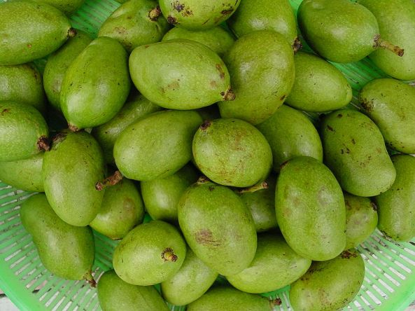 Green mangoes of the Philippines