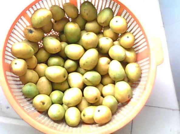 A basket of ripe mangoes from Bangladesh