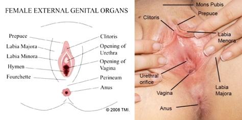 Bagian-bagian-vagina-yang-dipermak-saat-operasi-Vaginoplasty-horz