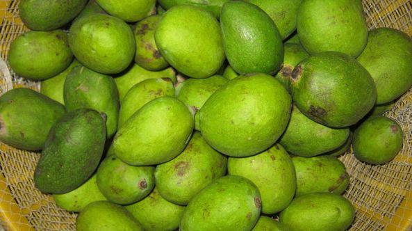 Green Mango of Bangladesh