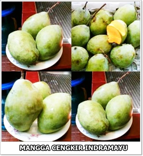 Mangga Cengkir Indramayu-1-600-01