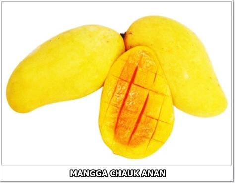 Mangga Chokanan-2-02