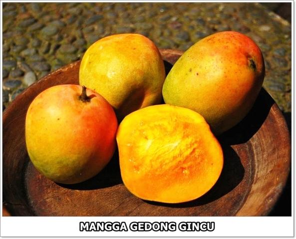 Mangga Gedong Gincu-1-01