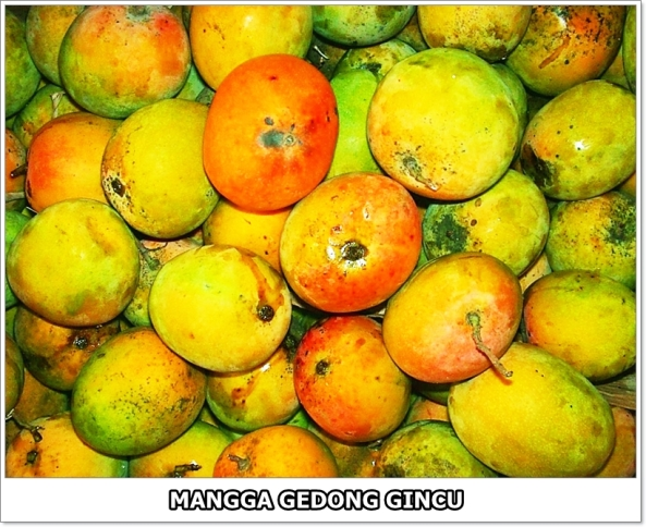 Mangga Gedong Gincu-3-01