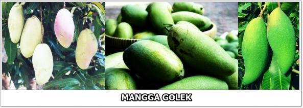 Mangga Golek-2-horz-01