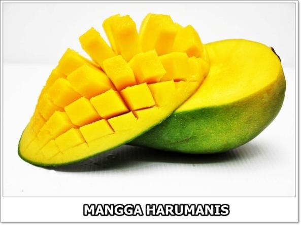 Mangga Harumanis-2-01