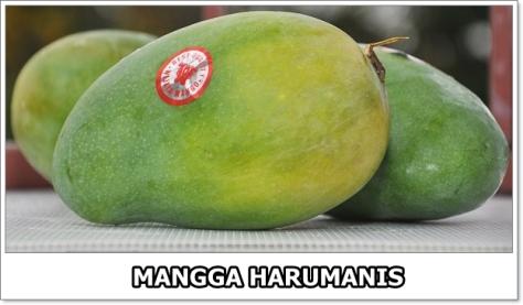 Mangga Harumanis-6-01