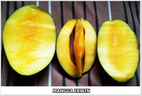 Mangga Irwin-2-01