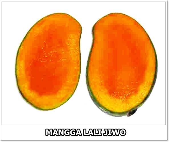 Mangga Lali Jiwo-01