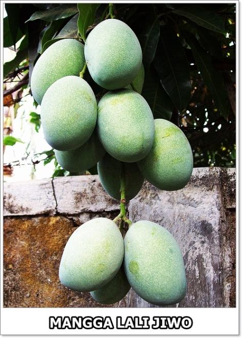 Mangga Lali Jiwo-1-01