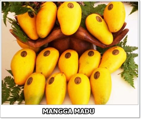 Mangga Madu-1-01
