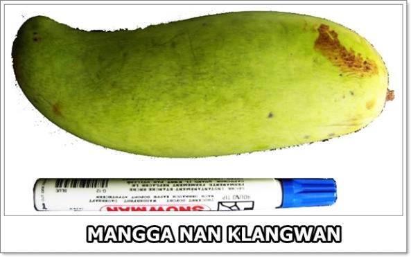 Mangga Nan Klangwan-01