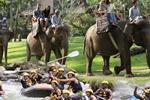 Bali Adventure Tours - Day Tours (Denpasar)-150-100