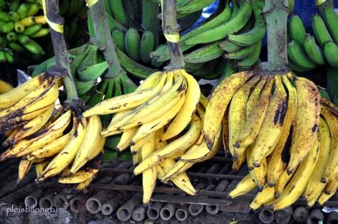 pisang-tanduk