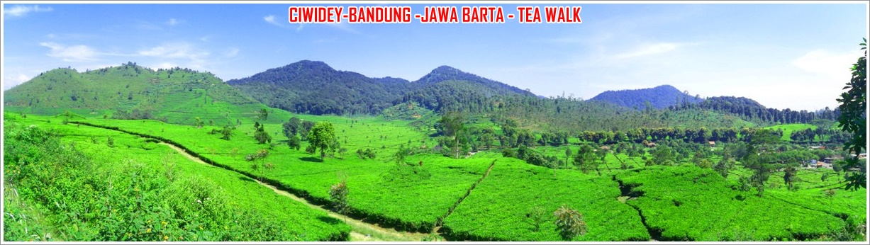 ciwidey-tea-walk
