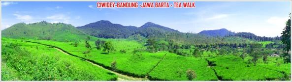 ciwidey-tea-walk
