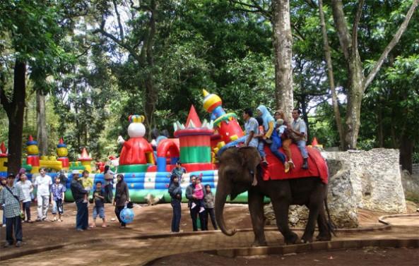 menunggang-gajah-di-kebun-binatang-bandung-600x382