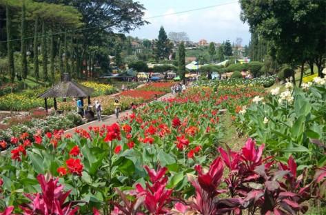 para-penggemar-tanaman-bunga-wajib-datang-ke-kebun-bunga-cihideung-600x396