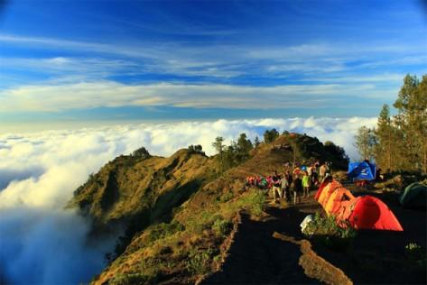 Pepohonan-cemara-di-ketinggian-2.000-3.000-meter-dpl-Gunung-Rinjani-600x400