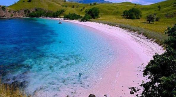pulau-komoda-panatai_pink