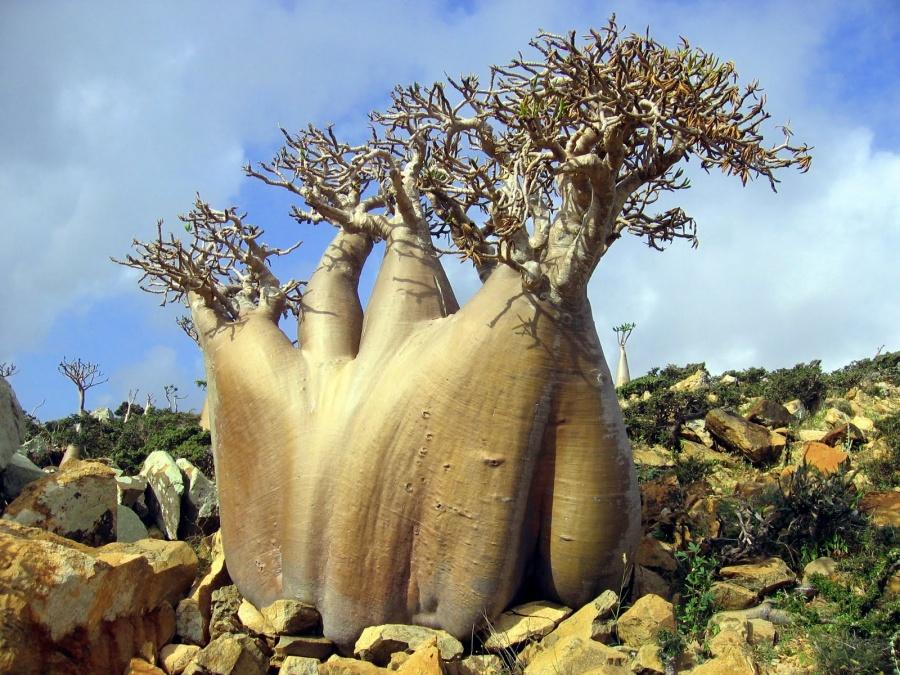 socotra-archipelago-yemen