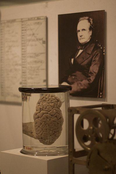 399px-Babbages_Brain