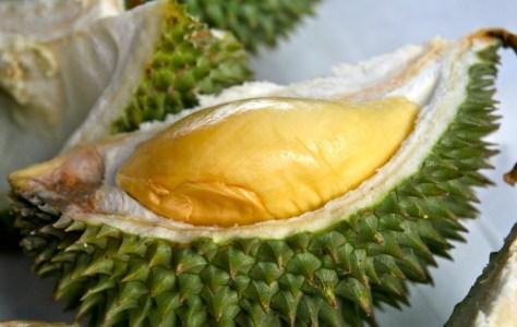 durian-tembaga