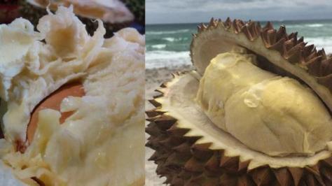 jenis-durian-otong