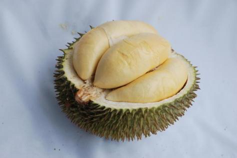 jenis-durian-terong