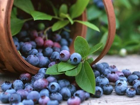 Manfaat-Buah-Blueberry