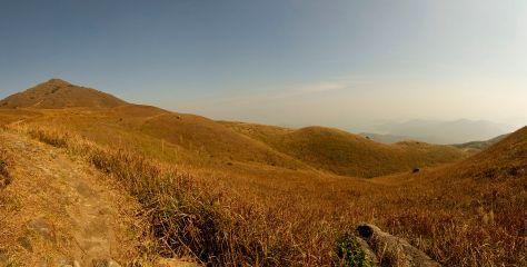 Lantau_montane_grassland