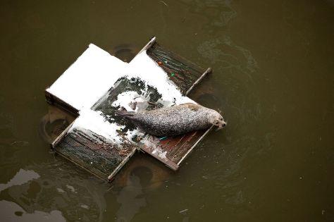 Seal_St._Saviour's_Dock_London