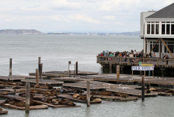 1024px-Pier_39_Sealions,_SF,_CA,_jjron_26.03.2012
