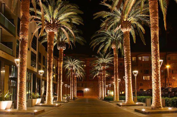 1024px-SAN_JOSE_CALIFORNIA_PALM_TREE_2010