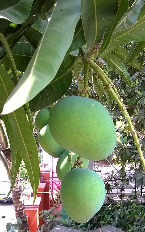 Home_mango