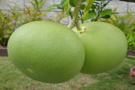 Kulit-Jeruk-Bali