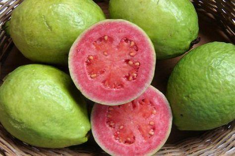 manfaat-buah-jambu-biji-putih-untuk-kesehatan