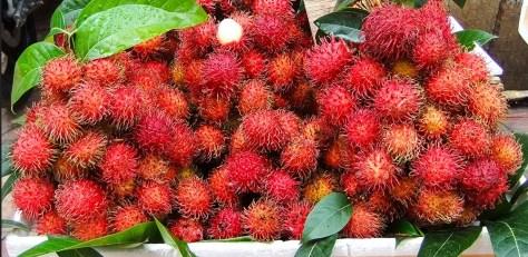 manfaat-buah-rambutan
