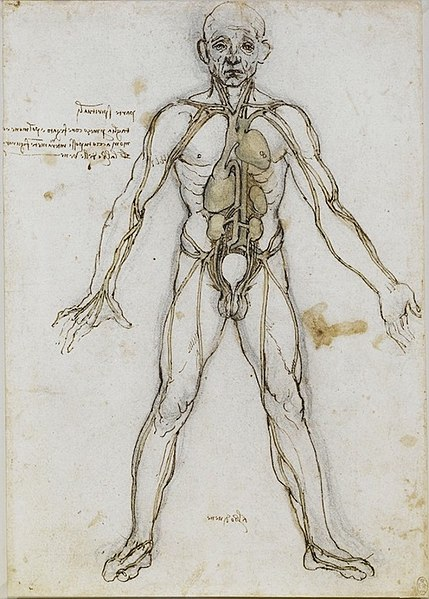 429px-Anatomical_Male_Figure_Showing_Heart,_Lungs,_and_Main_Arteries