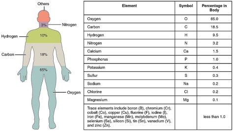 800px-201_Elements_of_the_Human_Body-01