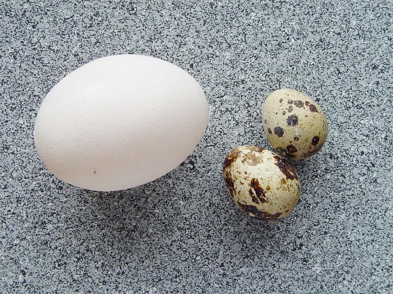 800px-Coturnix_coturnix_eggs
