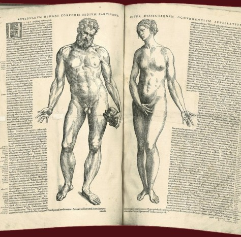 Externarvm_hvmani_corporis_sedivm_partivmve,_1543.