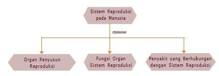 peta-konsep sistem reproduksi pada manusia