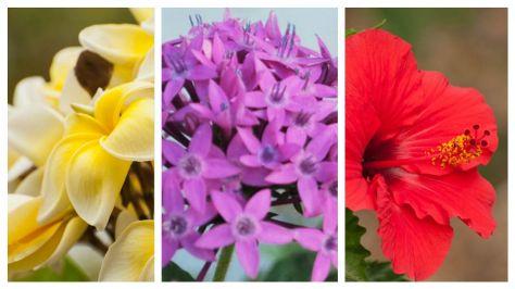 flowers-isha-yoga-center