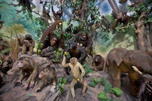 Primate_Taxidermy,_Rahmat_International_Wildlife_Museum_and_Gallery