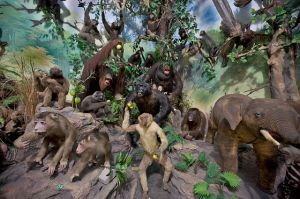 Primate_Taxidermy,_Rahmat_International_Wildlife_Museum_and_Gallery